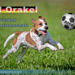 Achtelfinale Costa Rica gegen Griechenland – unser tierisches WM-Orakel