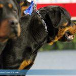 Unbekannte setzten vernachlässigten Rottweiler in Hörsching aus