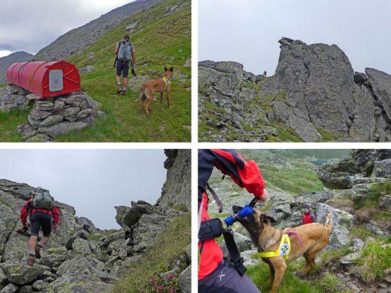 Suchhundelehrgang Bergrettung Steiermark