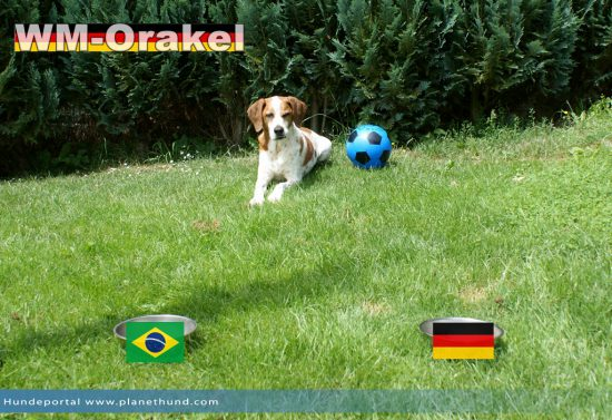 Halbfinale der WM2014: Brasilien vs Deutschland