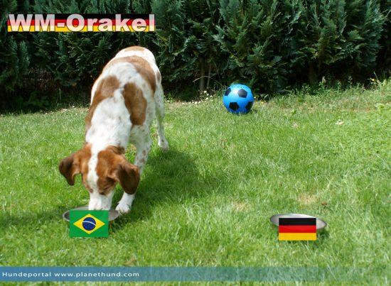 Laut unserem Orakel wird Brasilien in das Finale einziehen!