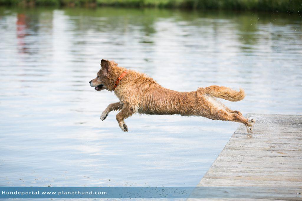 Hund Sprung Wasser