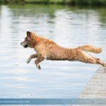 Baden mit Hund – Tipps für wasserscheue Hunde