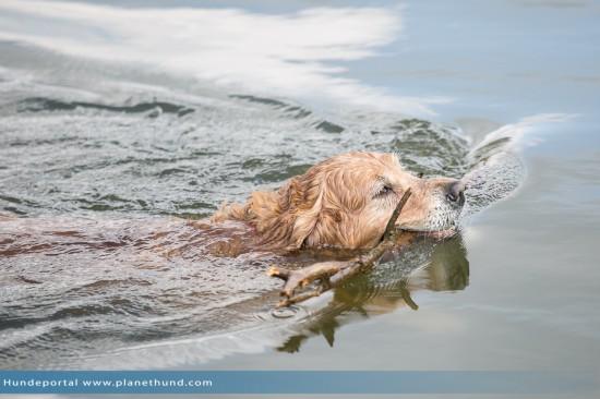Hund schwimmen lernen