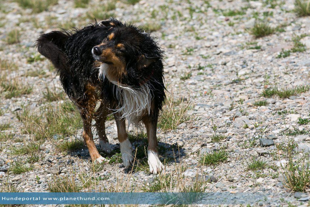 Hund Strand Schwimmen