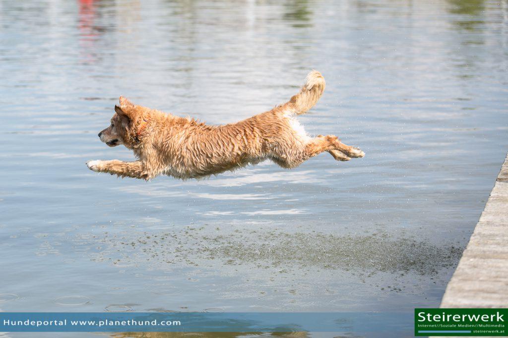 Hund Wasser Ratgeber