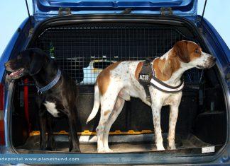 Hunde Auto Ratgeber
