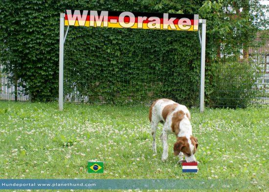 Der 3. Platz bei der WM2014 geht an die Niederland!