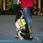 REHA Therapiehund Assistenzhund