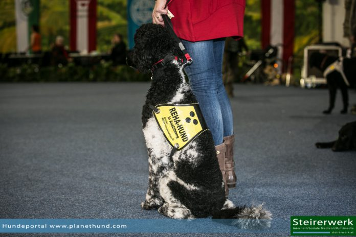 REHA Therapiehund Assistenzhund