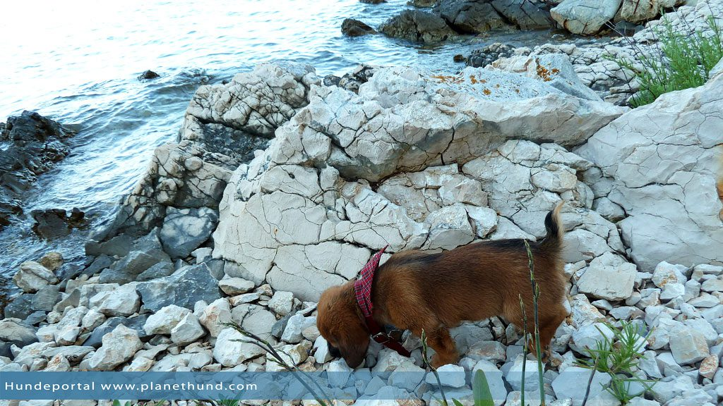 Hund Meer Strand