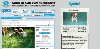 Tierinserate Welpenhandel