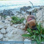 Hundediebstahl: Hunde im Urlaub nicht unbeaufsichtigt lassen