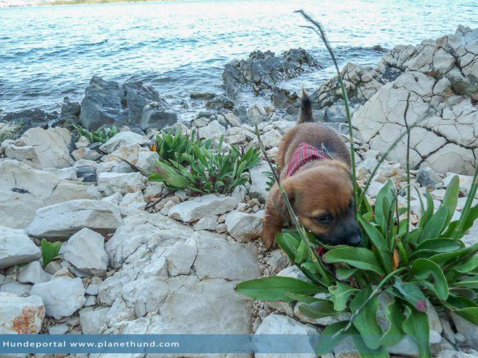 Urlaub Hund Meer