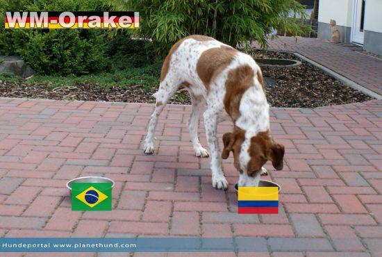 Sehr überraschend: Kolumbien soll das Spiel gegen Brasilien gewinnen!