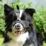 Auch ein derart niedlicher Hund kann einen Maulkorb benötigen.