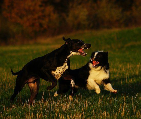 Barney und Monty im Spiel