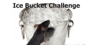 Gegen Ice Bucket Challenge