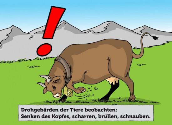Drohverhalten von Kühen auf der Alm