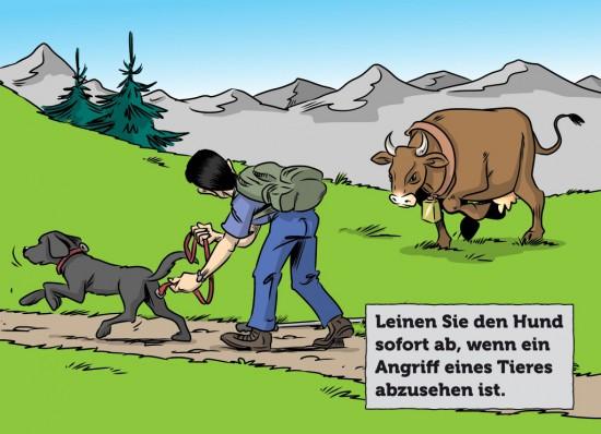 Konfrontation Kuh Stier mit Hund