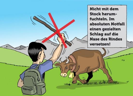 Kuh Weidetier Mensch Alm Wanderung