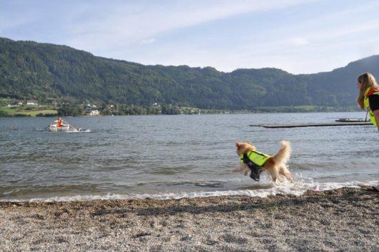 Hund Strand See