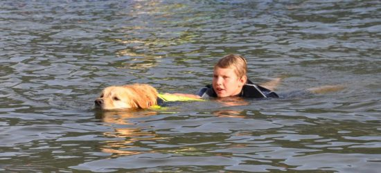 Golden Retriever Wasserrettung