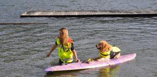 Wasserrettung Hund