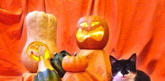 Halloween Katzen Hunde