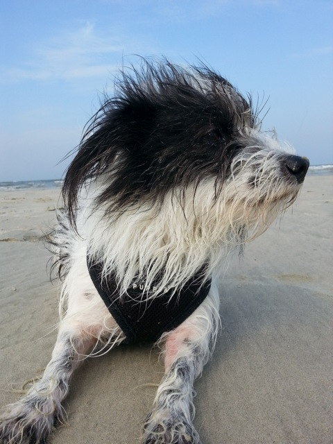 Insel Langeoog Dünen Hund