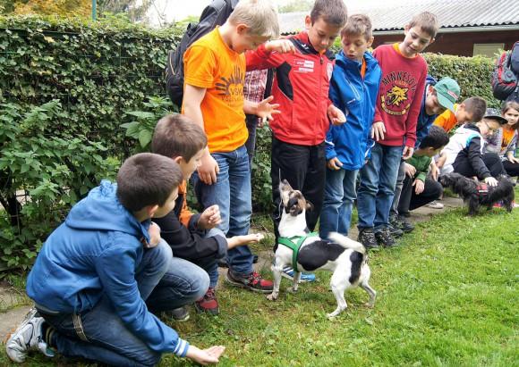 Hunde Tiere Schüler Tierschutz