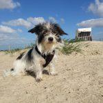 Urlaub mit Hund in Ostfriesland – Moin, Moin!