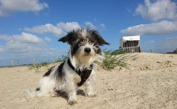 Hund Ostfriesland Urlaub