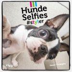 Hunde Selfies: Fotobuch von Hansi Trompka