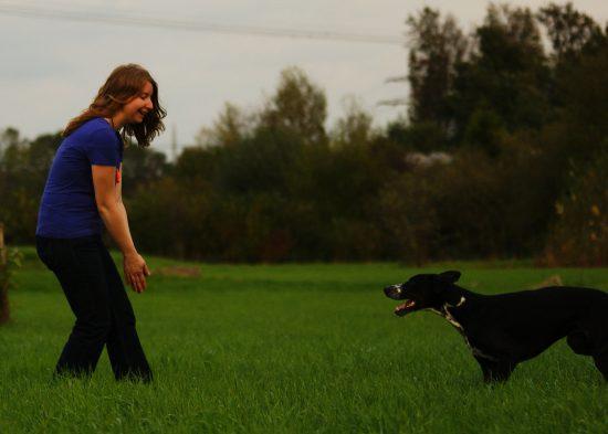 Körpersprache Sozialität Mensch Hund