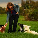 Leckerchen in der Hundeerziehung: Ein Reizthema