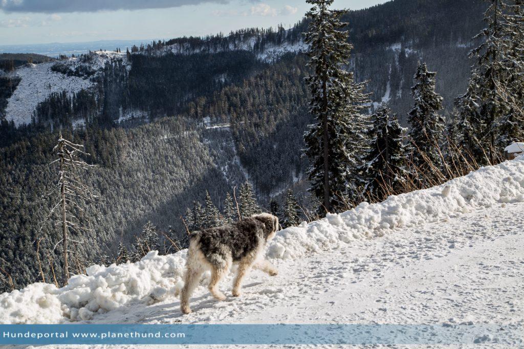 Hund Schnee Berg