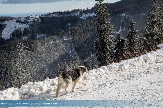 Hunde im Winter: Ratgeber für Winterfreuden im Schnee auf ...