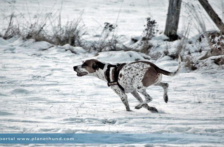 Hund Winter Schnee