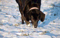 hunde im winter