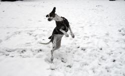 Hund Schnee Winter Mandel