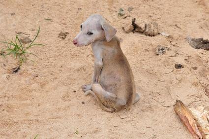 Straßenhund