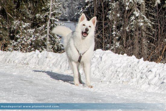 Wandern Hund Schnee Berg