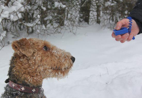 Ein handelsübliches Ketten- oder Würgehalsband sowie ein Stachelhalsband. Beide sind in Deutschland erlaubt und überall zu kaufen. Besonders das Stachelhalsband wird von Verfechtern sanfter Erziehungsmethoden abgelehnt und stark kritisiert. Denn dem Hund werden hierdurch unweigerlich Schmerzen zugefügt. Dies führe zu Vertrauensverlust zwischen Hund und Hundeführer und erschwere so jede weitere Ausbildung. Erziehung über Schmerz könne zudem lediglich Symptome bekämpfen, nicht die Ursachen ungewünschten Verhaltens angehen. Insbesondere beim Einsatz gegen aggressives Verhalten wie z.B. bei Hundebegegnungen sei es kontrainduziert, da dem Hund hiermit die Ausgangssituation, aufgrund der er aggressiv reagiert, zusätzlich schmerzhaft gestaltet wird, was zu noch mehr Abneigung gegenüber der Situation und damit noch mehr Aggression führen könne. Befürworter dagegen verweisen auf die Notwendigkeit, auch sehr große, kräftige und noch wenig erzogene Hunde führbar zu machen und gezielte, wirksame Impulse in der Ausbildung setzen zu können.