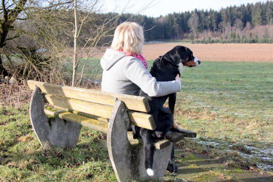 Hund Frau Bank