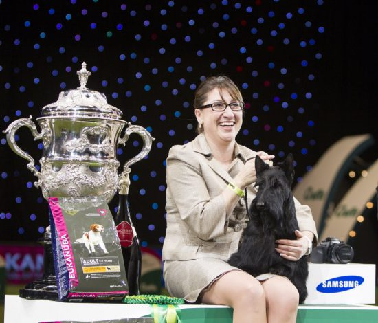 crufts 2015 best in show scottish terrier kanopa