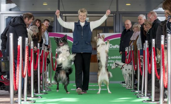 crufts 2015 vip dogs