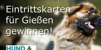 Gewinnspiel Hund & Heimtier Gießen gewinnnen