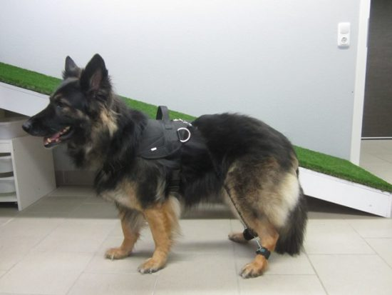 Deutscher Schäferhund Expander