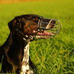 Der Hundehalter des Hundehalters größter Feind?